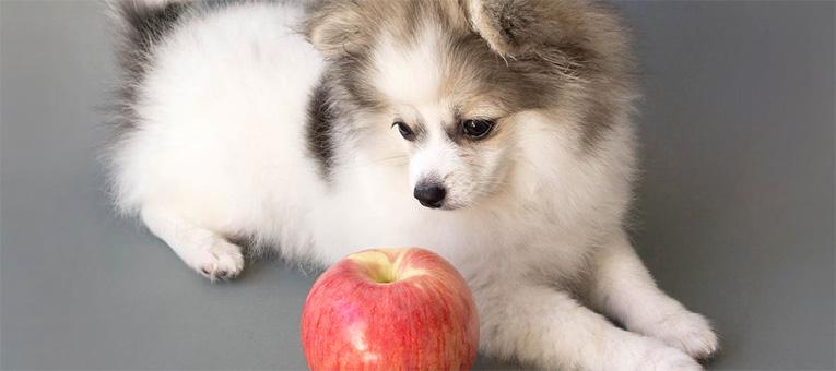 psy mogą jeść jabłka