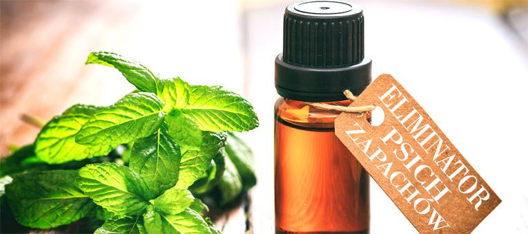 Wybór odpowiednich produktów czyszczących oraz odświeżaczy powietrza