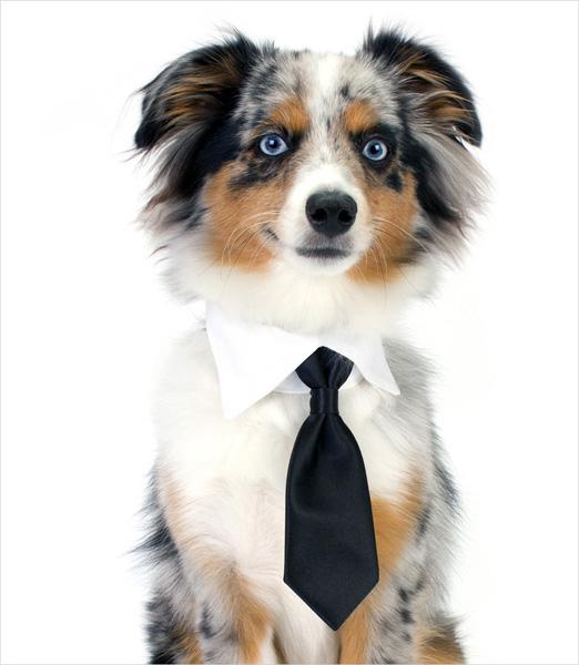 kołnierzyk z krawatem dla psa