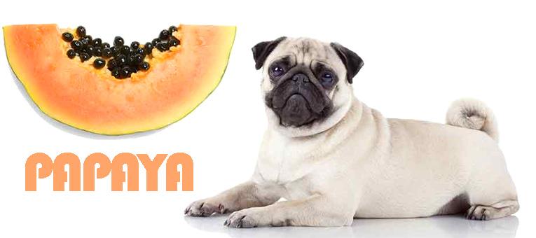 papaya dla psa