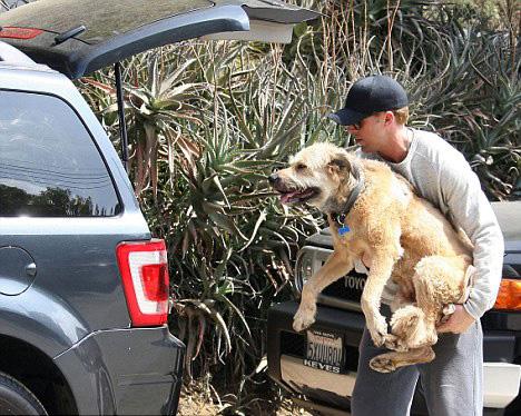 schody dla psa do auta