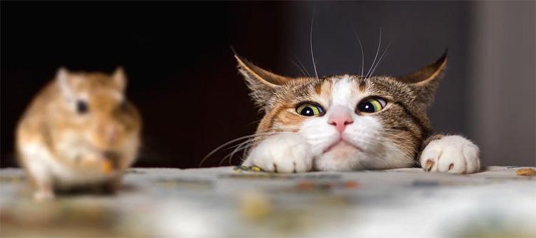 socjalizacja kota