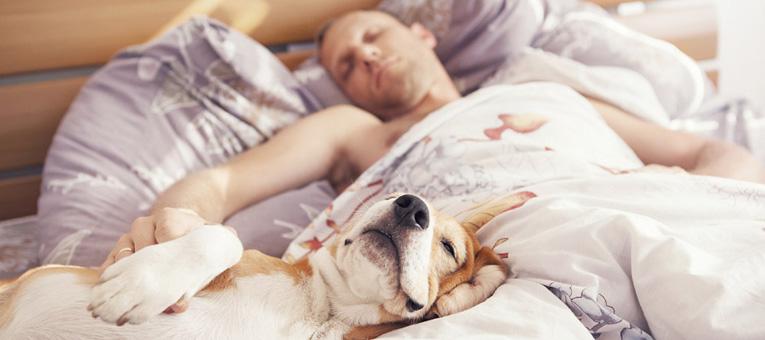 czy pies może spać w łóżku