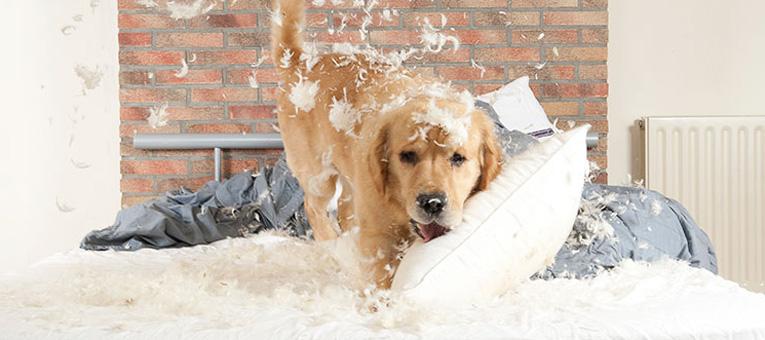 dlaczego pies gryzie legowisko