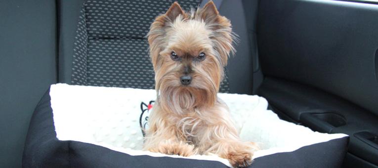 fotelik samochodowy dla psa