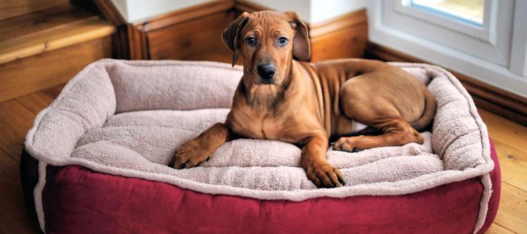 gdzie umieścić posłanie dla psa w domu