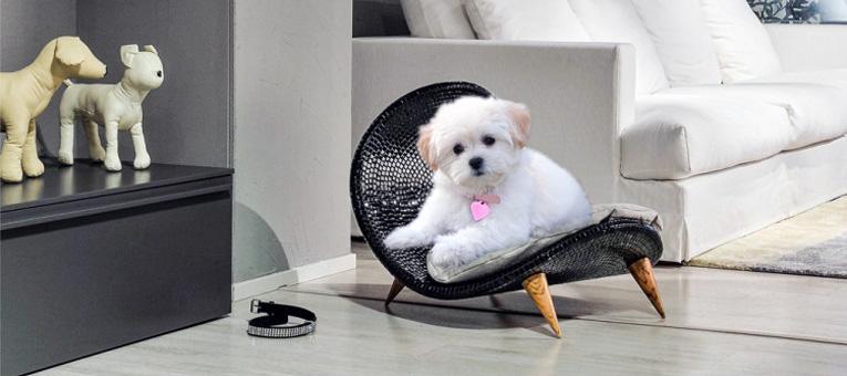 legowisko dla małego psa