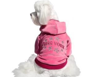 odzież dla psa