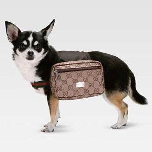 plecak dla psa