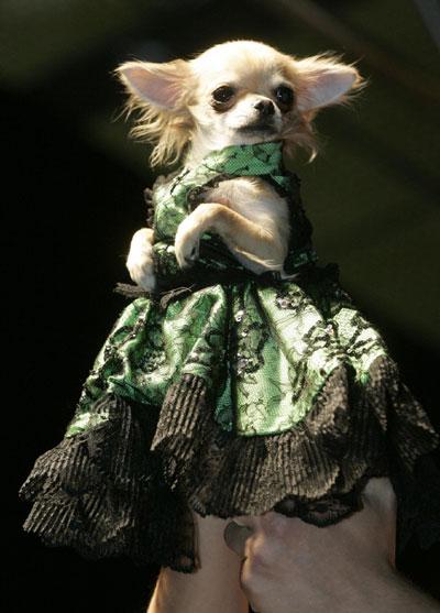 pokaz odzieży dla psów
