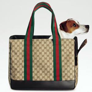b1a4c37516df0 Marka Gucci projektuje akcesoria dla psów - Sklep zoologiczny York ...