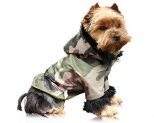 ubranie dla psa kurtka