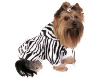 ubranie dla psa zebra