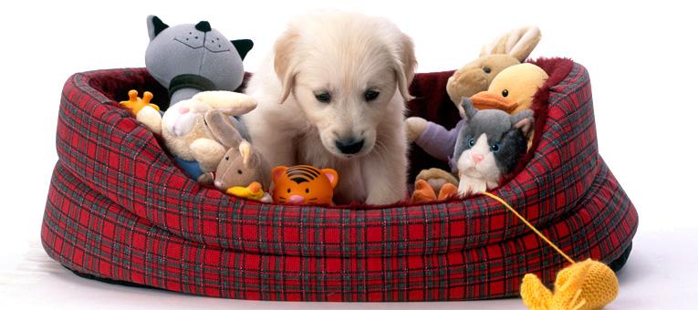 zabawki dla psa szczeniaka